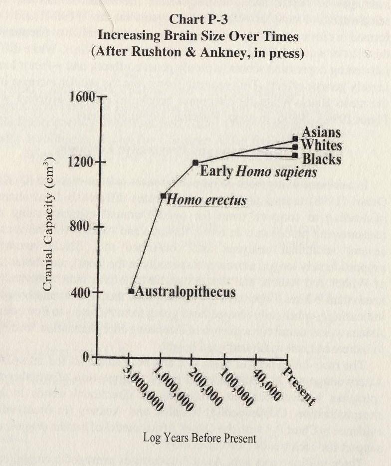 Position des africains, des européens et des est-asiatiques dans l'évolution